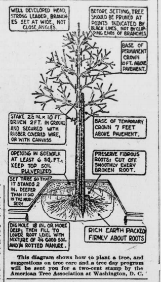 Diagram shows how to plant a tree and tree care suggestions by the American Tree Association at Washington, D. C.