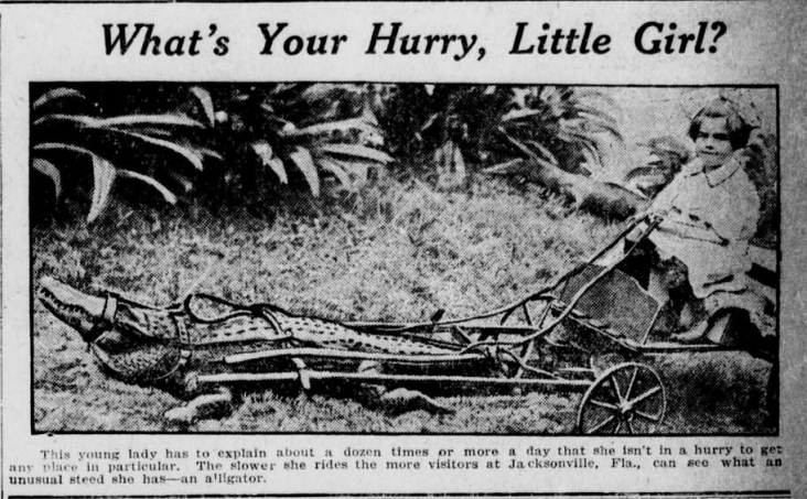 "Image of a girl in a carriage pulled by an alligator. The heading is ""What's Your Hurry, Little Girl?"""