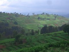 Omar McDoom conducted his research in Tare in southern Rwanda