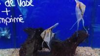 aquario 800x 600 scalaire