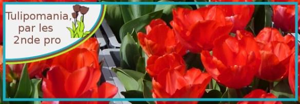 tulipomania 2ndepro