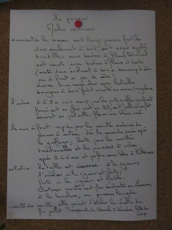 Description Pommier