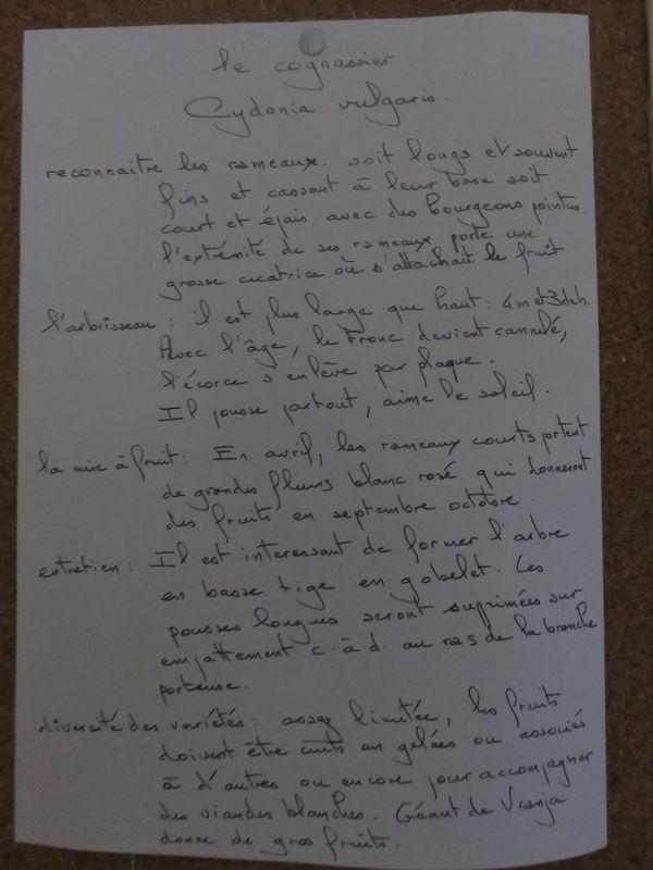 Description Cognassier