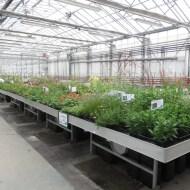 plantes vivace