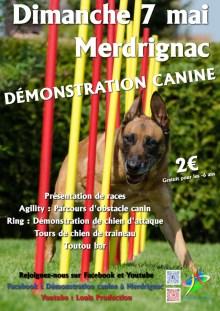 demo-canine