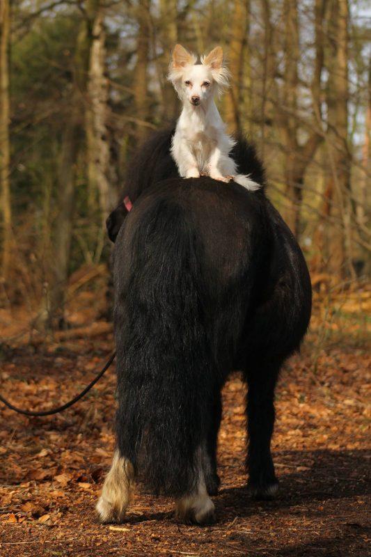Weer een ochtenden ponys