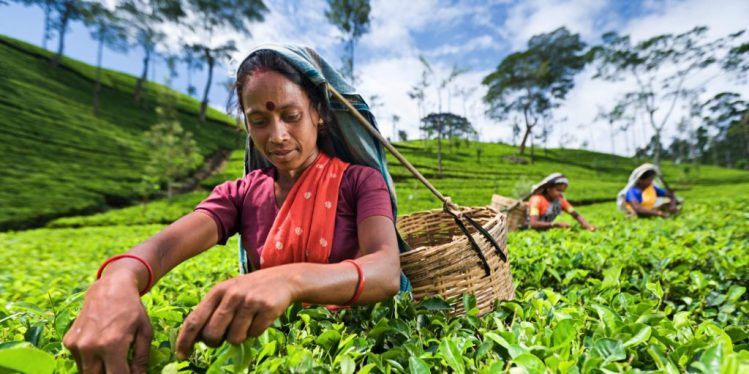 Sri Lanka agricultural workers