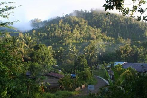 Gorontalo-Regenwald in Indonesien - Foto: Barend van Gemerden