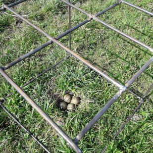 Nestschutzkorb