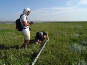 Messung der Sedimentation in der Salzwiese.