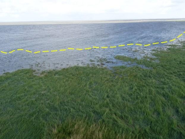 """Das Hochwasser lief besonders hoch auf und überflutete weite Teile der Salzwiese. Die gelbe Line markiert die """"normale"""" Hochwasserlinie."""