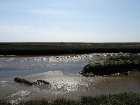 Trischens Salzwiese ist durchzogen von einen natürlich gewachsenem Prielsystem - an manchen Stellen nicht überwindbar