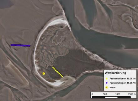 Lage der Probeflächen: blau - Westwatt, gelb - Südostbucht