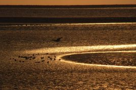Goldenes Meer (Foto: Tore J. Mayland-Quellhorst).