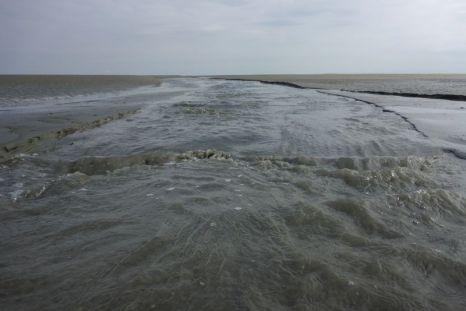 Ablaufendes Wasser in kleinem Priel (Foto: Tore J. Mayland-Quellhorst).