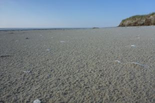 Krümeliger Strand nach Regen (Foto: Tore J. Mayland-Quellhorst).