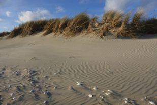 Südwestdüne vom Strand (Foto: Tore J. Mayland-Quellhorst).