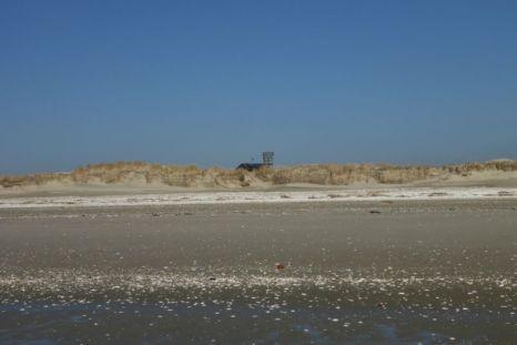 Das neue Heim lukt über die Düne (Foto: Tore J. Mayland-Quellhorst).