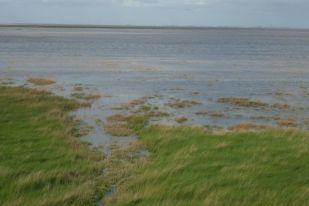 Hohes Hochwasser setzt untere Salzwiese unter Wasser (Foto: Tore J. Mayland-Quellhorst).
