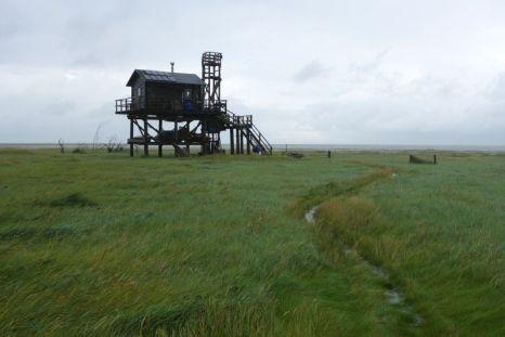 Die Hütte wird mal wieder von oben und unten nass, das Wasser steht bis in die Salzwiese (Foto: Tore J. Mayland-Quellhorst).