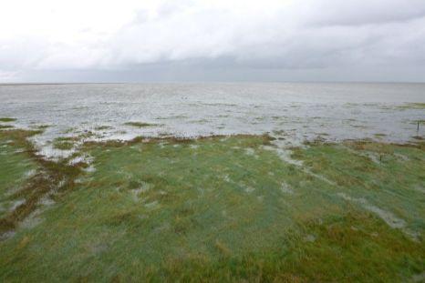 Nach dem Frühsommer mal wieder ein Hochwasser 60 cm über normal und die Salzwiese ist komplett unter Wasser (Foto: Tore J. Mayland-Quellhorst).