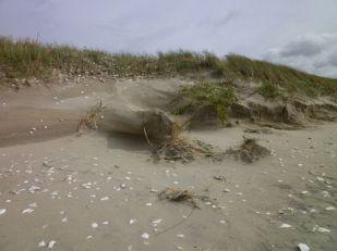 Erosionsspuren an S-Düne (Foto: Tore J. Mayland-Quellhorst).