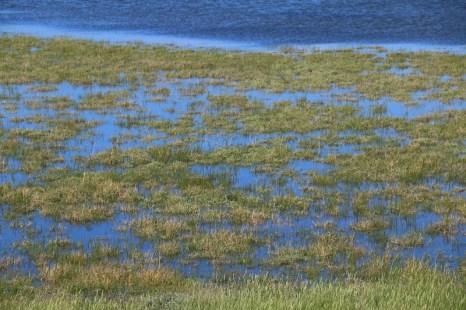 Sommerhochwasser mit etwa 50 cm über MHW (Foto: Jonas Kotlarz)