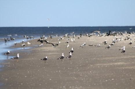 Rastvögel am Strand (Foto: Jonas Kotlarz)