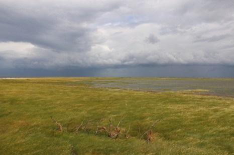 Das Lockgebüsch bei Hochwasser auf Trischen (Foto: Jonas Kotlarz)