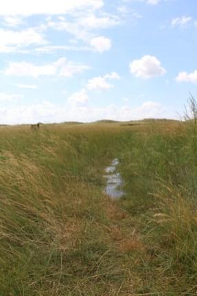 Hochwasser (Foto: Jonas Kotlarz)