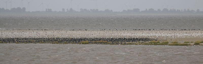 Rastvögel auf der Südspitze (Foto: Jonas Kotlarz)