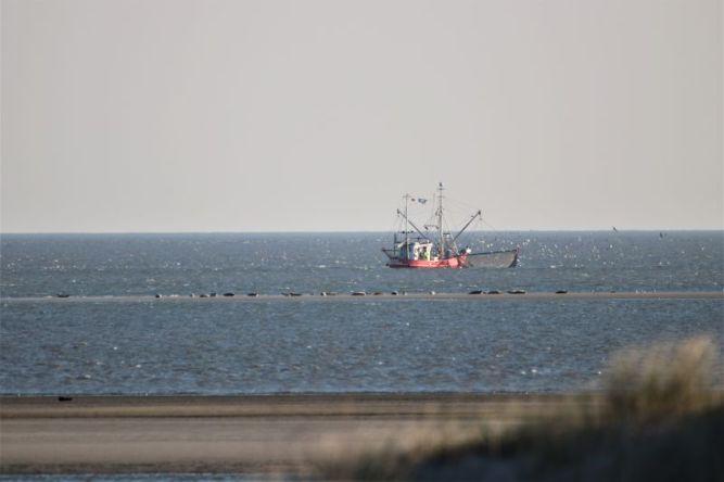 Krabbenkutter und Seehunde
