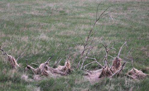 Das Lockgebüsch aus Hüttenperspektive (Foto: A. de Walmont)