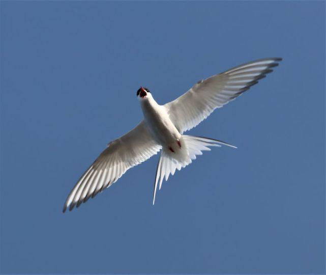 Vogelwartin wird beschimpft (Foto: A. de Walmont)