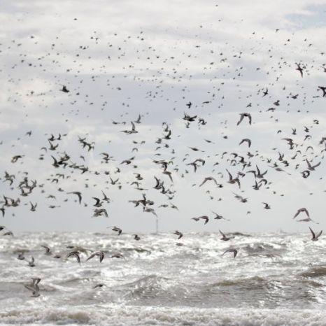 Vögel im Sturm