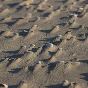 Sand wird gefangen