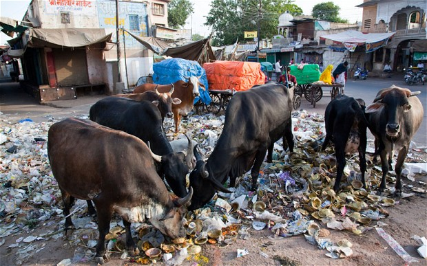 Image result for sketch of dirty houses in chennai with buffaloes and cowdung
