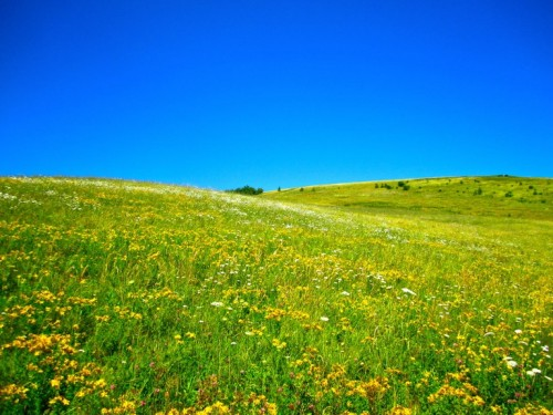 Max Patch: 300+ acres of grassy bald covered with wildflowers. Unlike the (perhaps) natural grassy balds at the Roan Highlands, Max Patch was cleared in the 1800s for a cattle and sheep pasture.