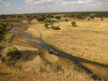 Another view of the River. The elephants were using their trunks to dig for fresher water!