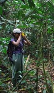Using the hypsometer to measure the height of Gambeya. (Credits: Therese Lamperty)
