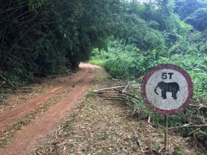 The road out of the research station, warning of elephants.