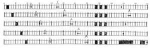 Eine typische Hafensymphonie