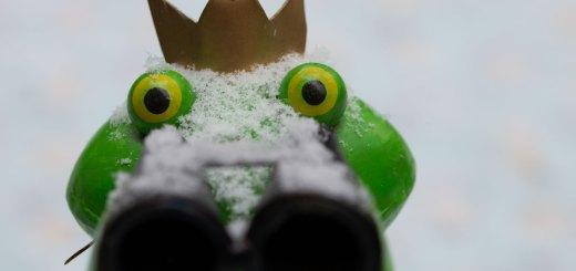 Ein Frosch im Schnee. Foto: Hufner
