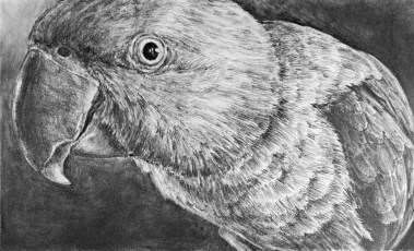"""Nesting #19, graphite on paper, 16"""" x 12"""", 2020, $400 without frame, $500 with frame"""