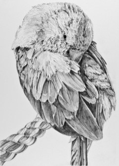 """Nesting #16, graphite on paper, 9"""" x 12"""", 2019, $250 without frame, $300 with frame"""