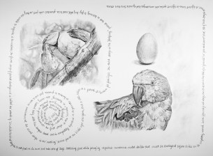 """Nesting #1, graphite on paper, 24"""" x 18"""", 2017, $500 without frame, $650 with frame"""