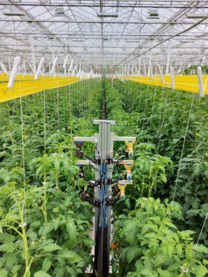 Arugga robot in tomato growhouse