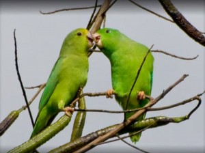 Touch is communication too. Even if it happens with the beaks.