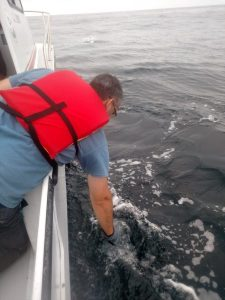 Holger collecting a water sample behind a common dolphin.