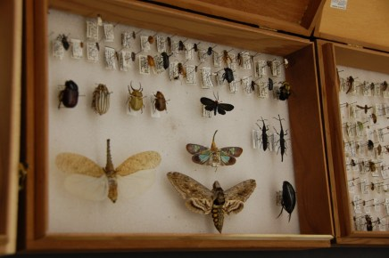 PdD student Emily Campbell brought her personal insect collections in to share